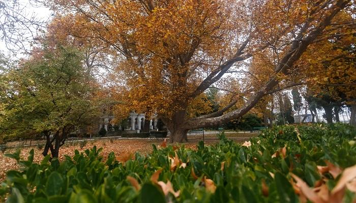 Парк дачи купца Стахеева в Алуште