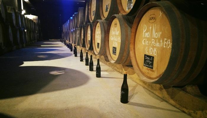 фото вина Павла Швеца