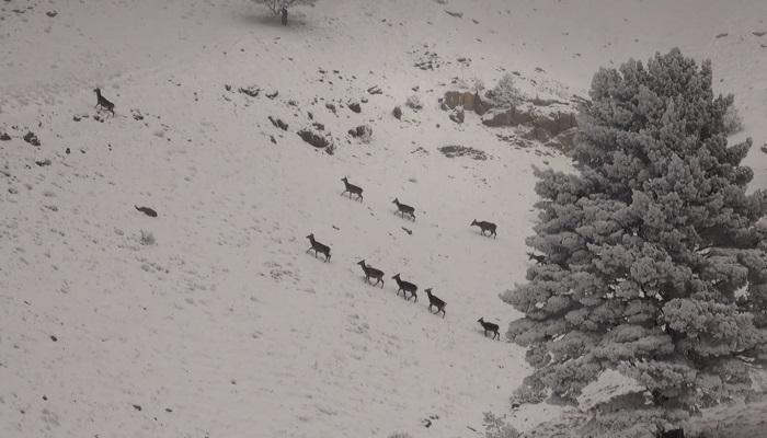 Фото Животные Крымского заповедника