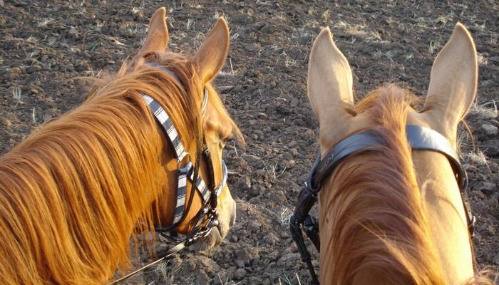 Конные прогулка Бурульча