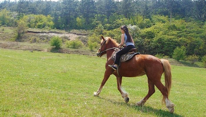 Фото Конные прогулки в Симферополе