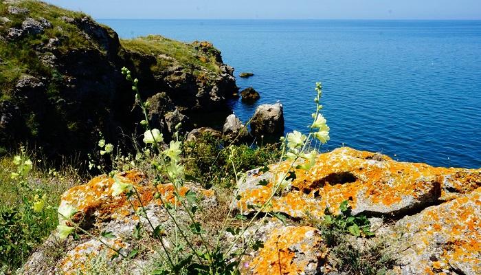 Фото Природа Казантипского заповедника