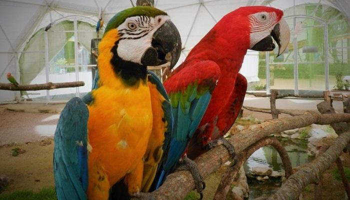 Фото Попугаи в парке птиц Коктебель
