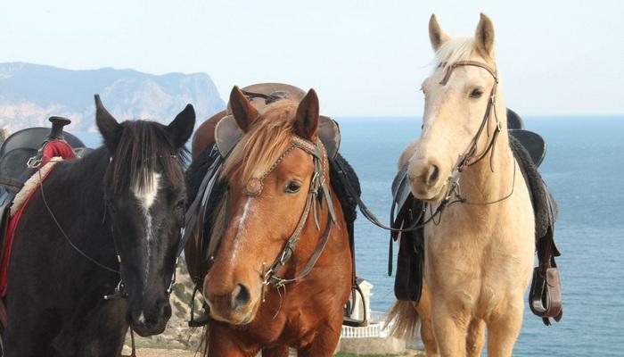 Конная база Ход конем