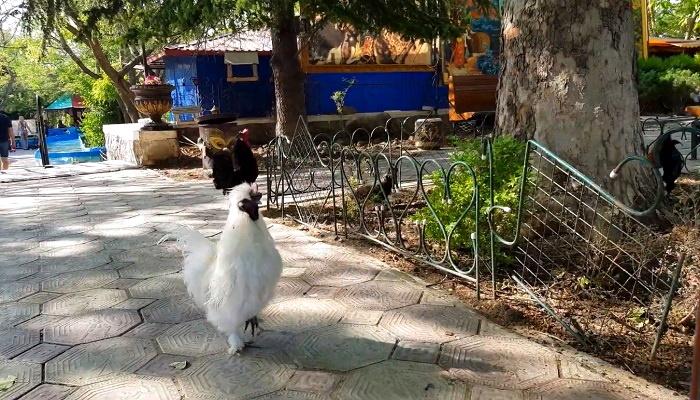 Контактный зоопарк в детском парке Севастополя