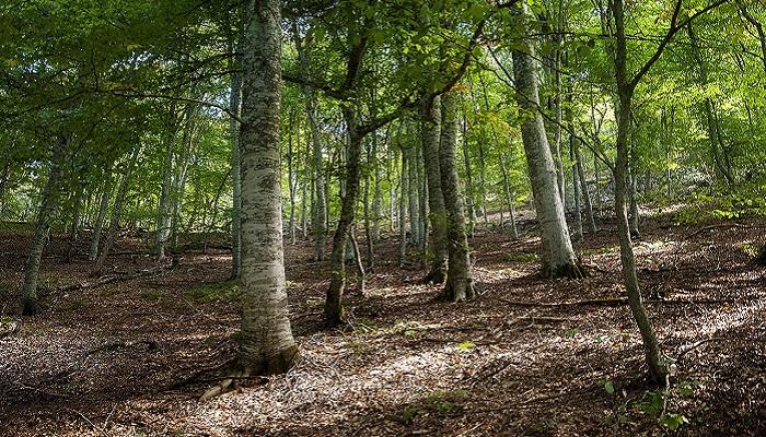 Фото Лиственный лес ущелья Узунджи