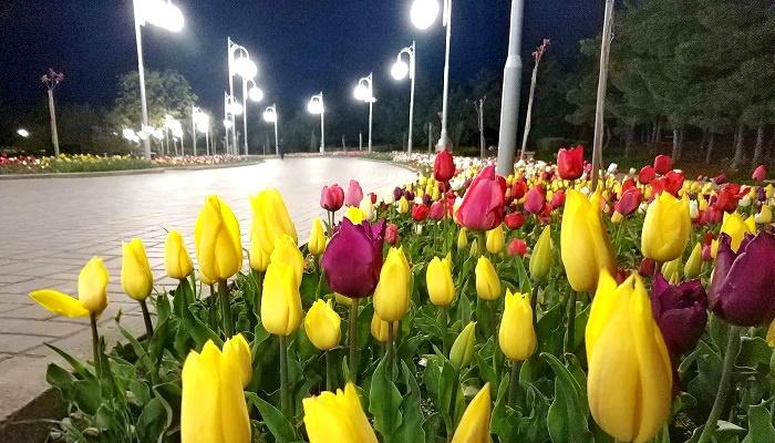 Парад тюльпанов в парке Ахматовой Севастополь