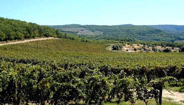 Виноградники Uppa Winery Севастополь
