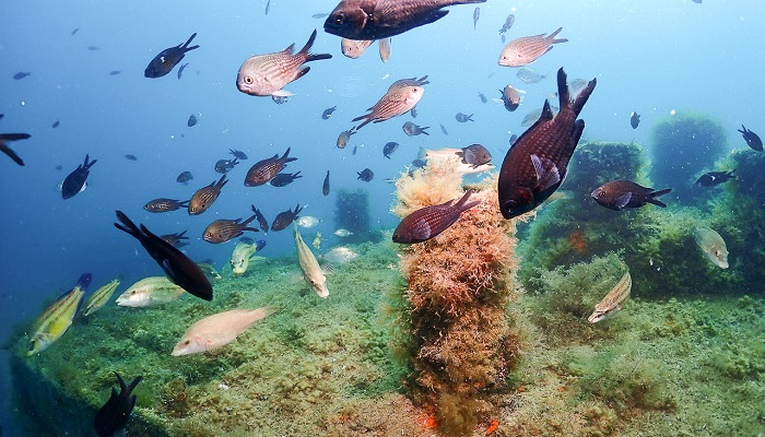 Дайвинг в Судаке рыбки