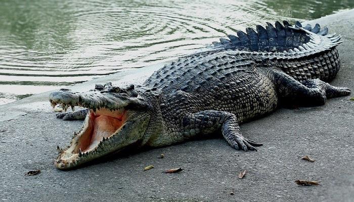 Фото Крокодиловая ферма в городе Судак