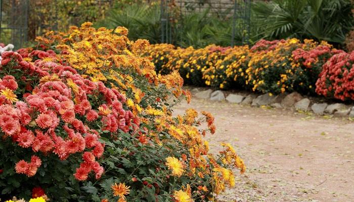 крым ботанический сад цветы