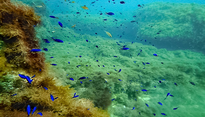 Подводное погружение Тарханкут