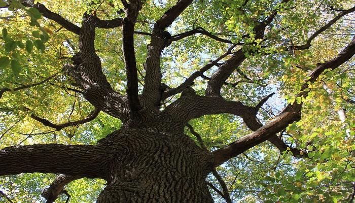 Фото Вековые деревья на пути к водопадам