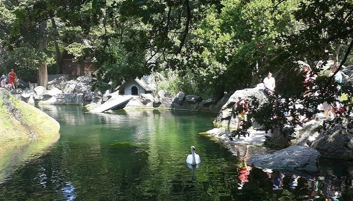 фото лебяжий пруд в Алупкинском парке