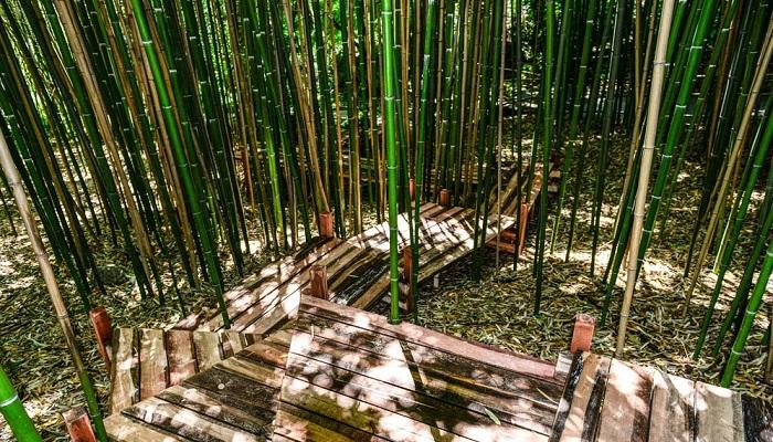 Бамбуковая роща Никитский ботсад в Ялте