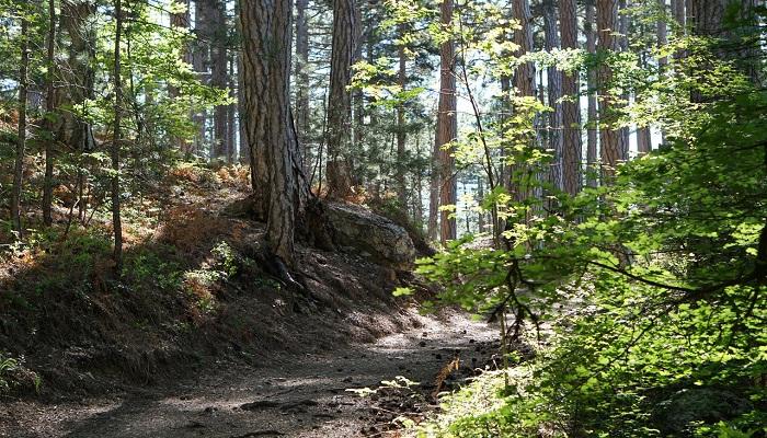 Фото Лес Ялтинского горно-лесного заповедника