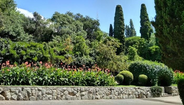 деревья мисхорского парка описание и фото изящная совсем
