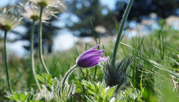 Фото Растения Ялтинского заповедника