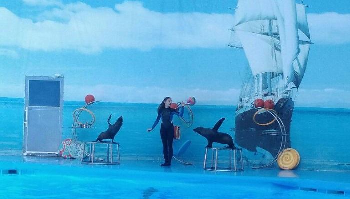 Фото Представление в дельфинарии Немо Алушта