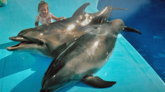 Фото Дельфины Алуштинского дельфинария