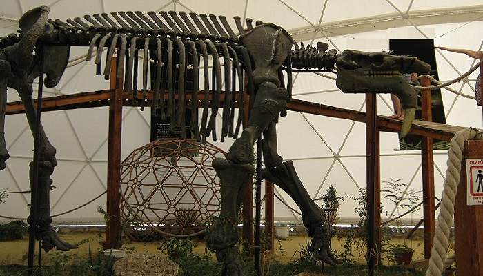 Фото Скелет динозавра