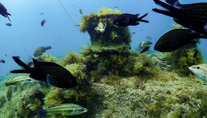 Рыбки Черного моря