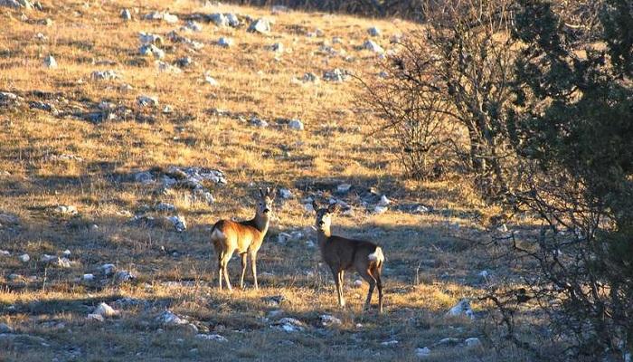 Фото Животные в Ялтинском заповеднике